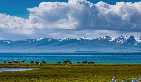 중앙아시아의 투르크