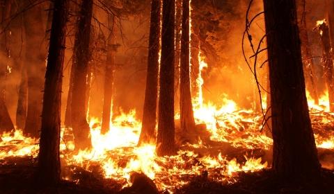 캘리포니아 대형 산불